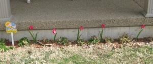 Pretty Pink Tulip Decor Our Flower Bed